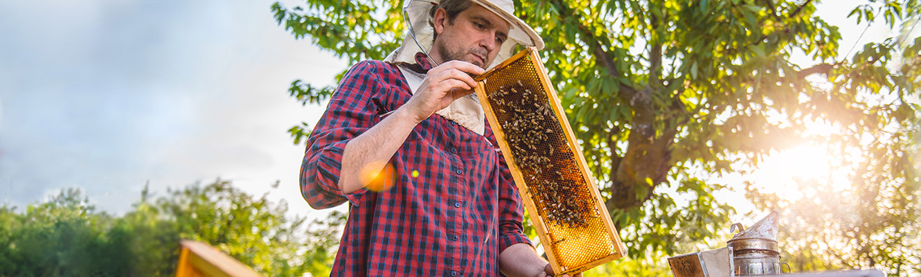 Man wearing beekeeper hat holding tray of bees.